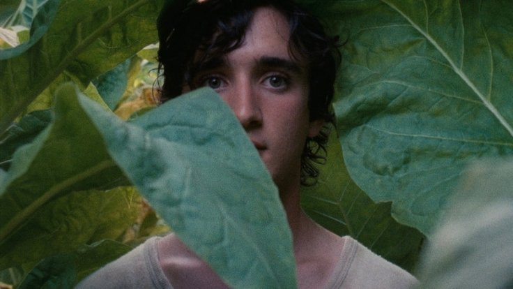 happy-as-lazzaro-leaves-01